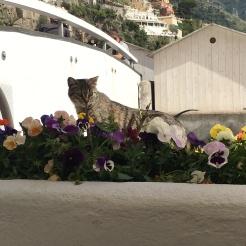 Stray cat in Positano