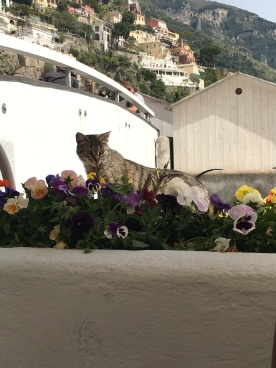 Stray cat in Positano