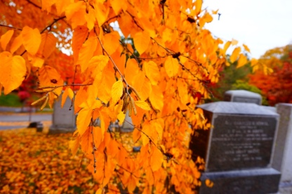 Fall Foliage; Sleepy Hollow Cemetery