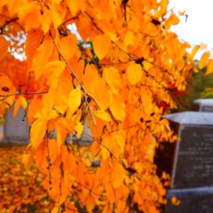 Fall Foliage; Sleepy Hollow Cemetery