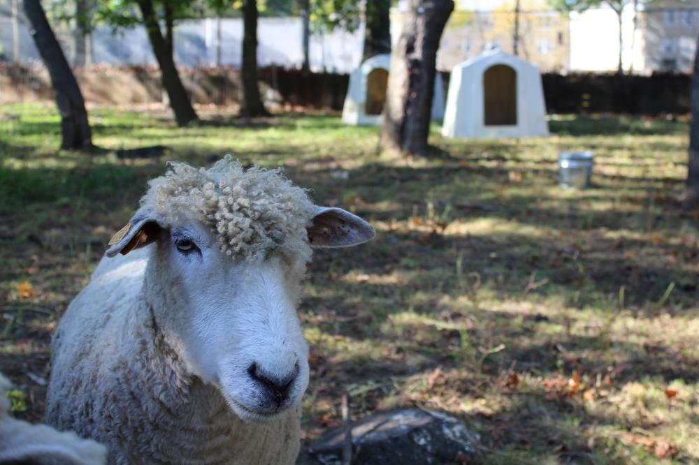 Queens County Farm